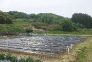 オーガニック・コットン苗植え体験の写真